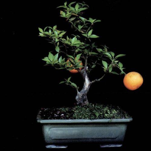 עץ הדעת, צילום 2004